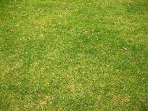 short grass landscapes