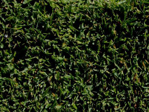 Short Grass Background
