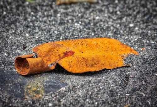 shovel  rust  old