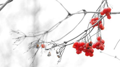 branch nature plant