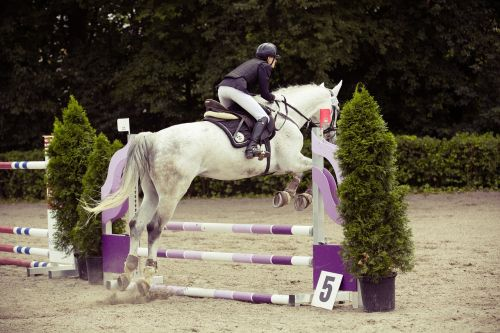show jumping horse tournament