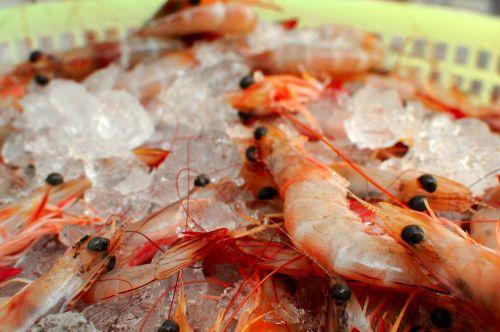 shrimp prawns iced