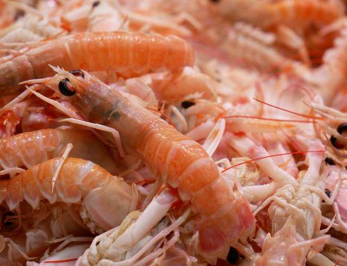 shrimp scampi seafood