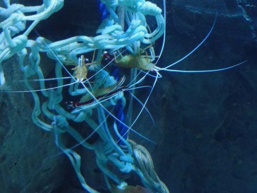 shrimp crustacean sea life