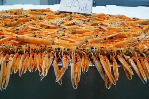 shrimp eat fish