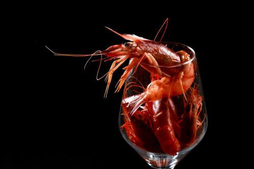 shrimp food red