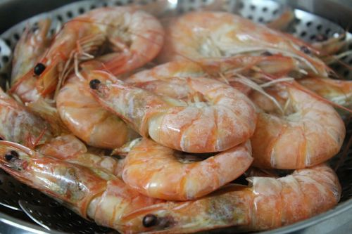 shrimp food steamed shrimp