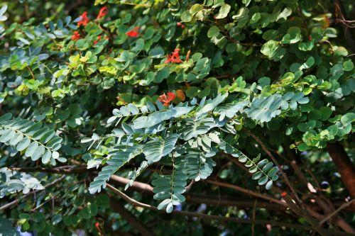shrub and tree foliage leaves