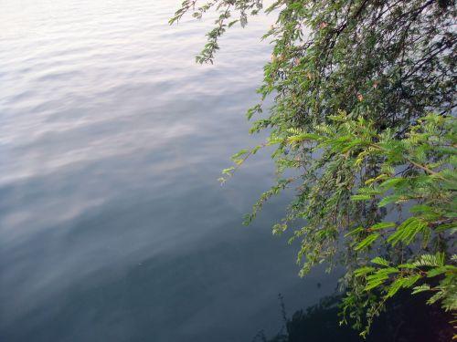 Shrub Overhang On Lake