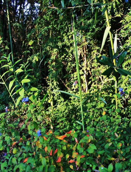 Shrubs, Reeds And Creepers