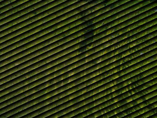 shutter green ripple