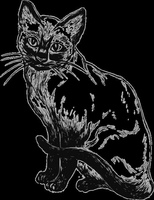 siamese cat feline pet