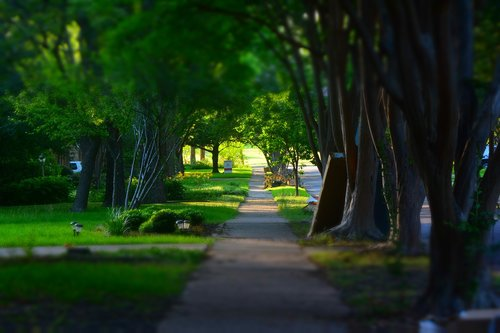 sidewalk  trees  miniature