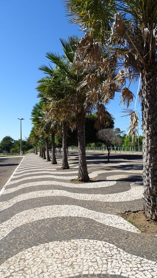 sidewalk trees copacabana