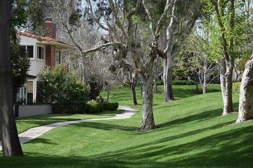 sidewalk  trees  greenbelt