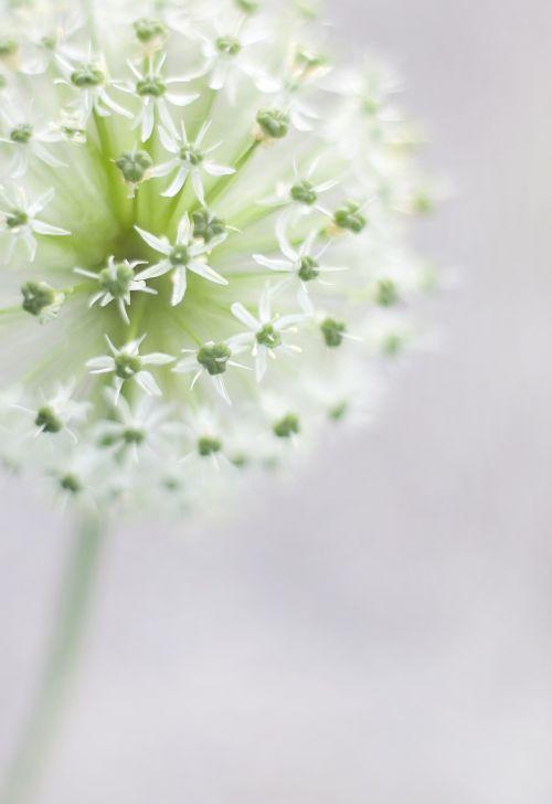 sierbloem white garden