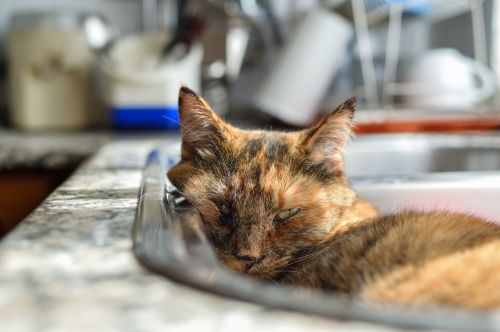 Nap In The Sink