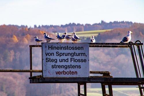 sign sprungturm gulls