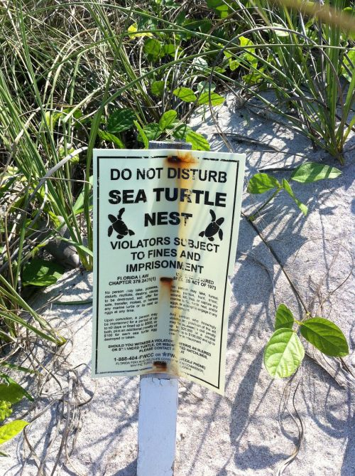 sign beach turtles