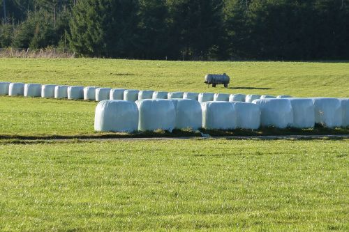 silage food agriculture