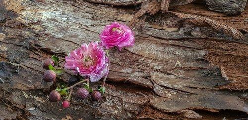 silent flower heads life  tree bark  old