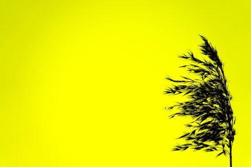 silhouette black yellow