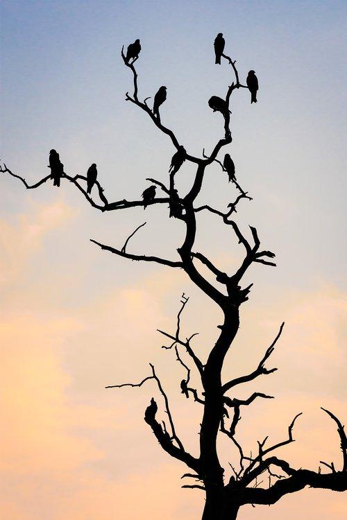 silhouette  tree  spring