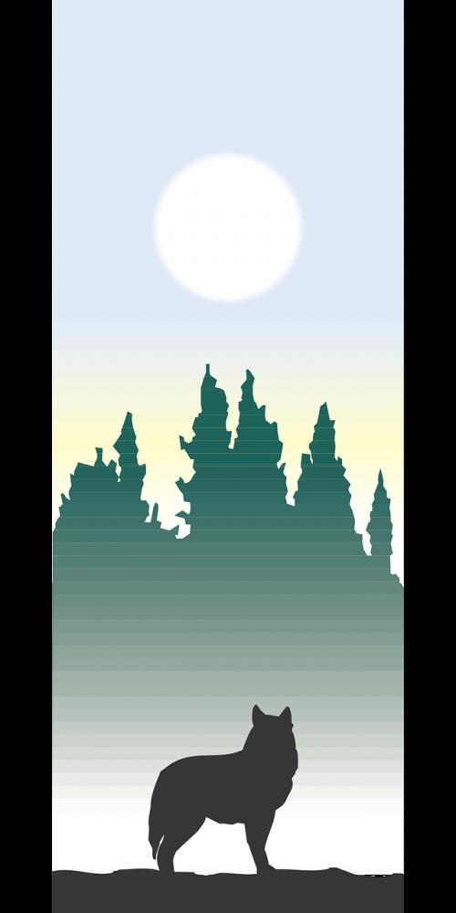 silhouette trees sun