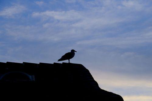 Silhouette Sea Gull