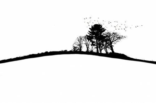siluetas, medžiai, medis, iliustracija, kraštovaizdis, gamta, siluetu medžiai