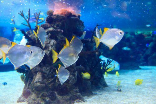 Silver Fish Underwater