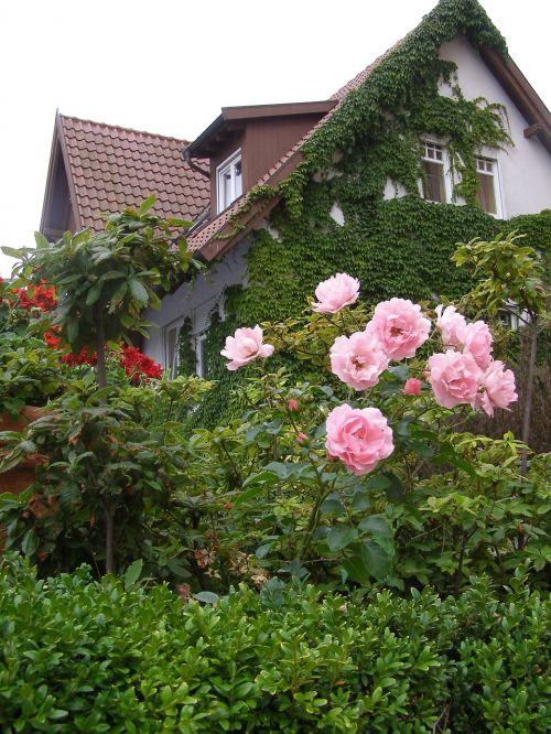 single family home home garden