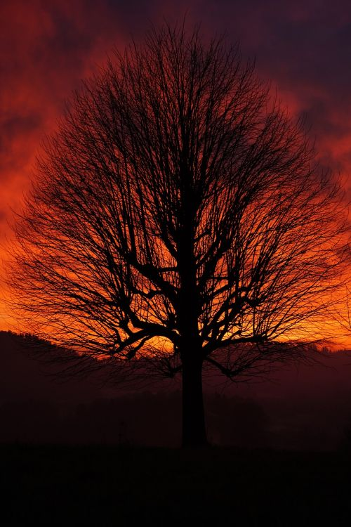 single tree solitary tree sunset