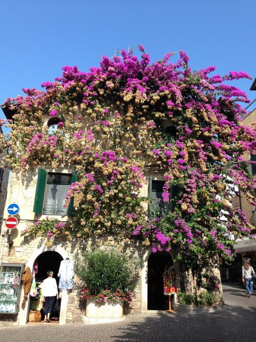sirmione flowers house