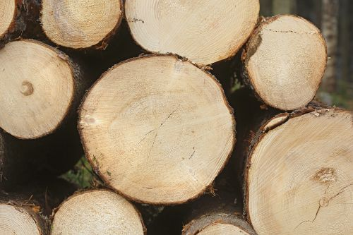 six spruce forest softwood