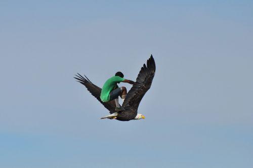 skatebirding eagle sky