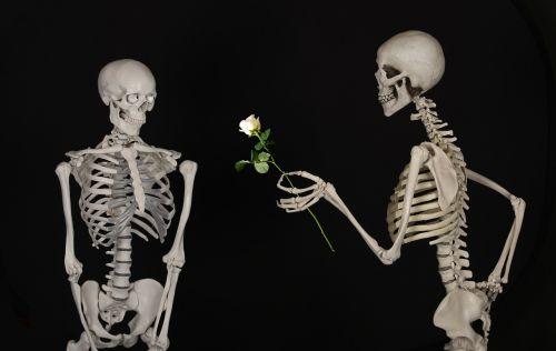 skeletal flower congratulations