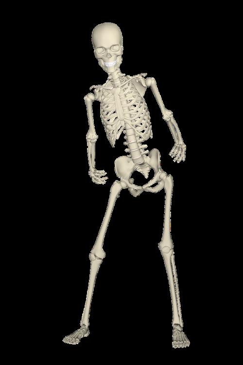 skeleton weis fall