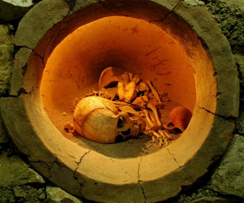 skeleton bones archaeology