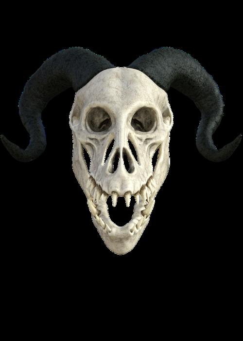 skeleton anatomy skull