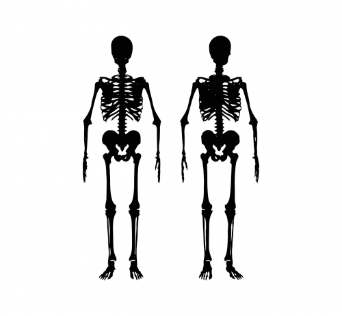skeleton body human