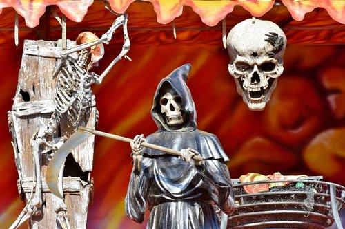 skeleton  bone  skull