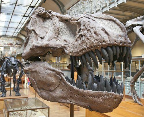 skeleton dinosaur skull