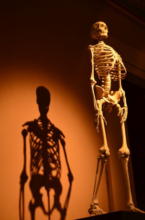 skeleton shadow human
