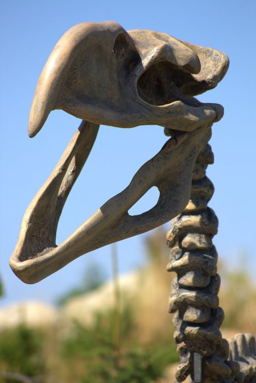 skeleton dinosaur fossil