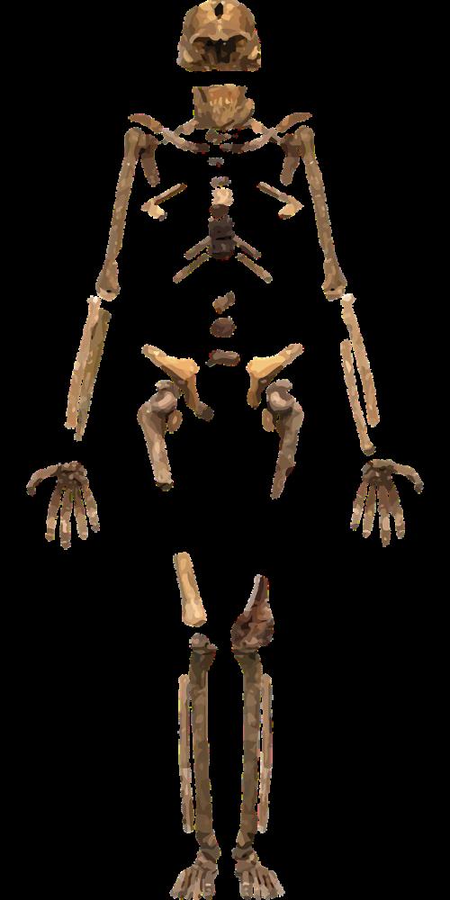 skeleton bones archeology