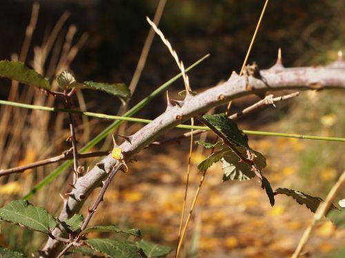 skewer thorns nature