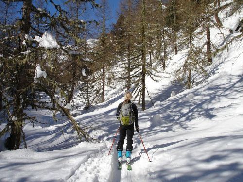 backcountry skiiing forest ski touring