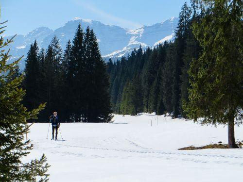 skiing cross country skiing ski