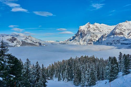 skiing alpine sport